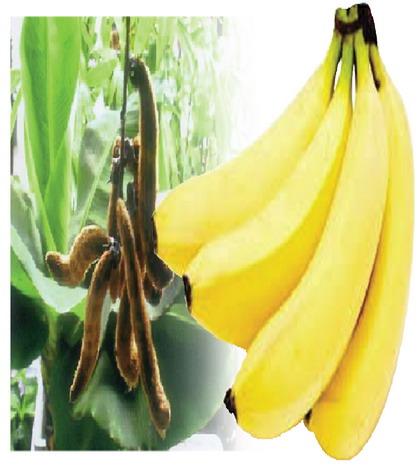 หมามุ่ย-กล้วยหอมทอง 'ลุงตู่'ไม่เข้าใจ Niche M..