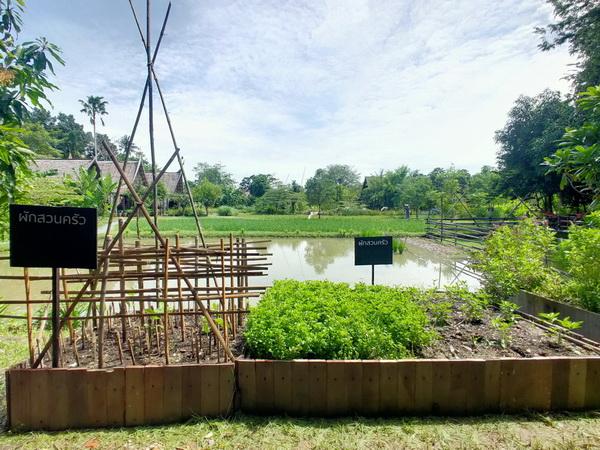 sam4 - สวนสามพราน-สามพรานโมเดล จุดประกายท่องเที่ยววิถีอินทรีย์ - C'mon